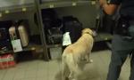 Operazione estate sicura nelle stazioni: 350 persone controllate – VIDEO