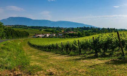 Le colline del Prosecco sono patrimonio dell'Unesco
