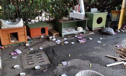 Vandali in azione devastano la colonia felina