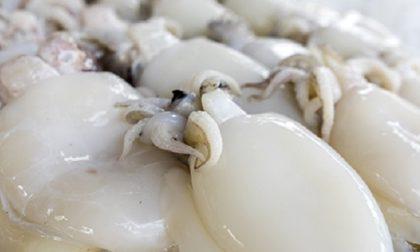 Ritirate dal commercio seppie surgelate prodotte a Novate Milanese per rischio chimico
