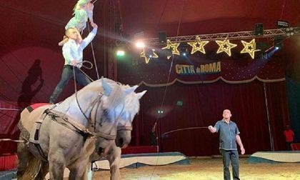 Circo in città, scoppia la polemica tra gli animalisti