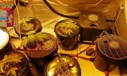 Operazioni anti droga della polizia nel weekend, sequestrata serra sul balcone di casa