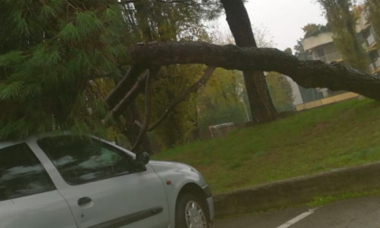 """Crolla un pino, il sindaco: """"Evento imprevedibile, dovuto alle piogge"""""""