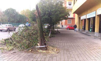 Maltempo: piogge intense e raffiche di vento provocano danni FOTO