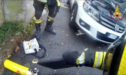 Gattino incastrato sotto il cofano: intervengono i vigili del fuoco per liberarlo FOTO