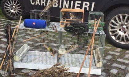 Cattura uccellini nel bosco: denunciato cacciatore