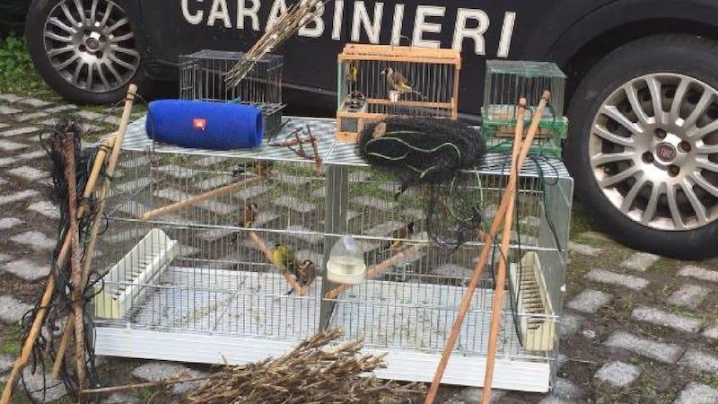 Cattura uccellini