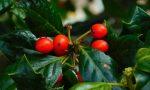 Le piante di Natale, dall'elleboro alla rosa