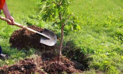Via Tolstoj: 43 nuovi alberi in sostituzione di quelli abbattuti