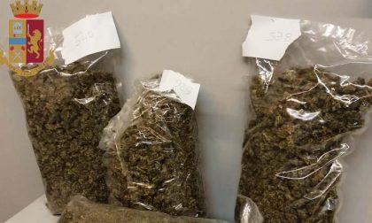 Sorvegliato speciale con mezzo chilo di marijuana in casa: arrestato