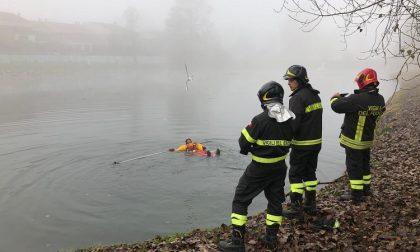 Gabbiano rimasto impigliato in un amo al laghetto, salvato dai vigili del fuoco