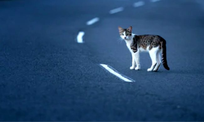 gatto provoca incidente autostrada