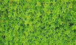 Green design con il giardino verticale