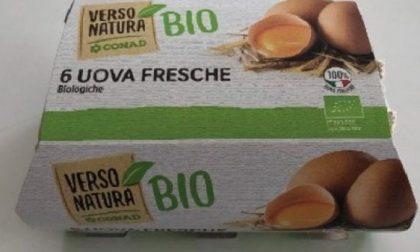 Nuovo allarme per le uova bio a rischio salmonella: ritirati nuovi lotti
