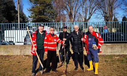 La Croce Verde Trezzano dona dieci alberi alla scuola elementare