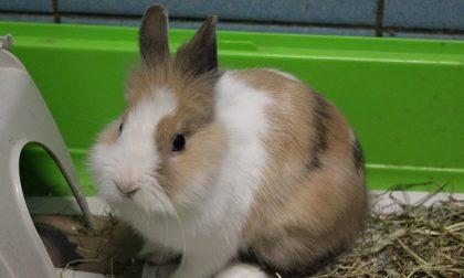 Coniglio trovato sotto una macchina: lo salvano gli operatori Enpa