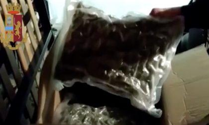 Quaranta chili di droga e 100mila euro in contanti sequestrati, quattro arresti per spaccio VIDEO