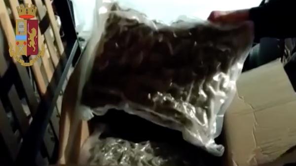 Quaranta chili droga arrestati