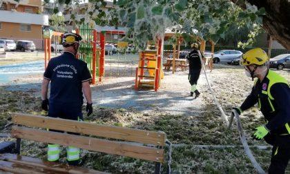 Danno fuoco ai pollini: incendio nell'area giochi dei bambini FOTO