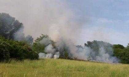Incendi a Trezzano e Cesano: a fuoco i piumini dei pioppi FOTO