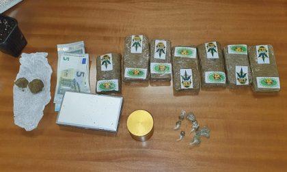 In casa 700 grammi di hashish e piantine di marijuana: arrestato 21enne