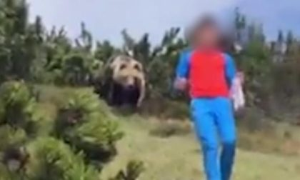L'incredibile video del ragazzino trovatosi a tu per tu con l'orso
