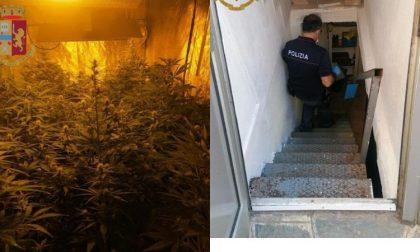 Undici piantine di marijuana nascoste nel sottoscala e uno scooter rubato: due denunce
