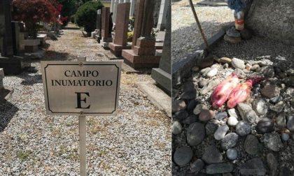 Macabro ritrovamento al cimitero: testicoli di toro su una tomba