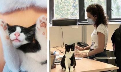 Il Comune adotta due gattini randagi: ora vivono nel municipio