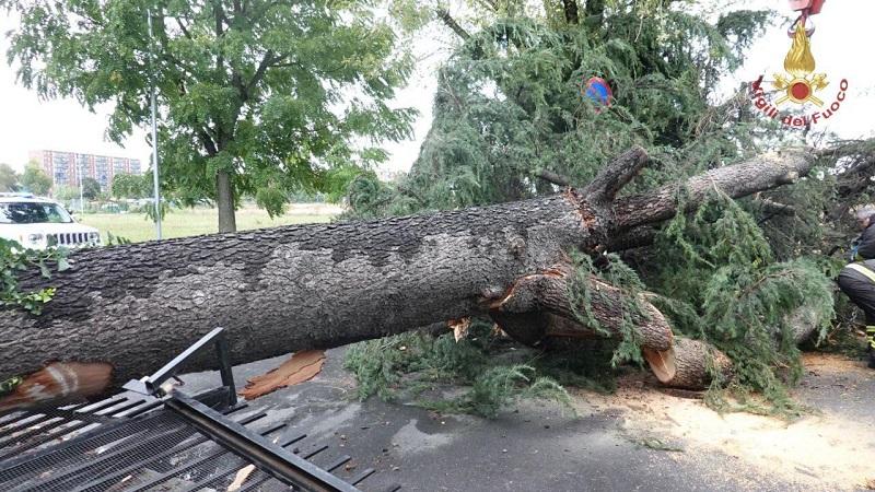 maltempo albero cade strada