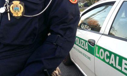Donna investita a Cesano, gli agenti risalgono all'identità grazie al suo cagnolino