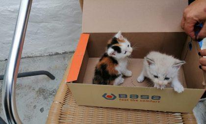 Gattini abbandonati in una scatola vicino a un cestino: salvati dai passanti