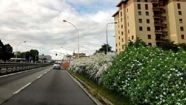 Nuova Vigevanese barriera verde