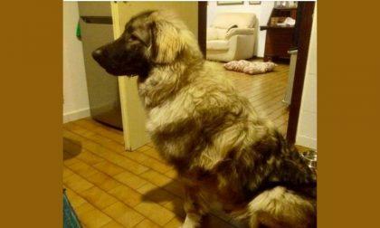 Cane picchiato e maltrattato: salvato e messo in sicurezza