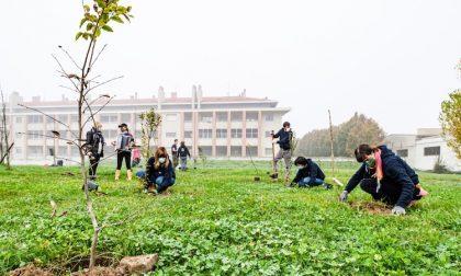 Foreste urbane, piantati 200 nuovi alberi in via Salvini