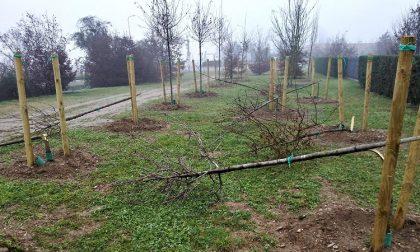Giardino dei Nuovi Nati distrutto: 17 alberi abbattuti con l'accetta FOTO