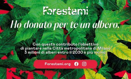 """""""A Natale regala un albero"""", la proposta di ForestaMi"""