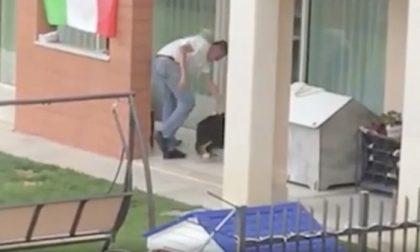 Maltratta il cane, arriva la denuncia ma il tribunale gli restituisce il cucciolo