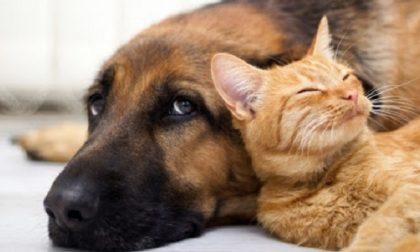 Come proteggere cani e gatti dai botti di Capodanno