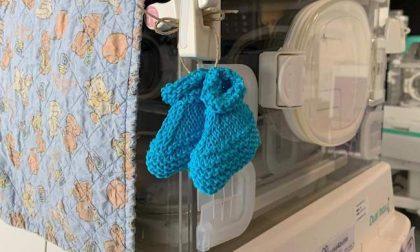 Le calzine dell'Epifania appese alle culle dei neonati nell'ospedale Niguarda