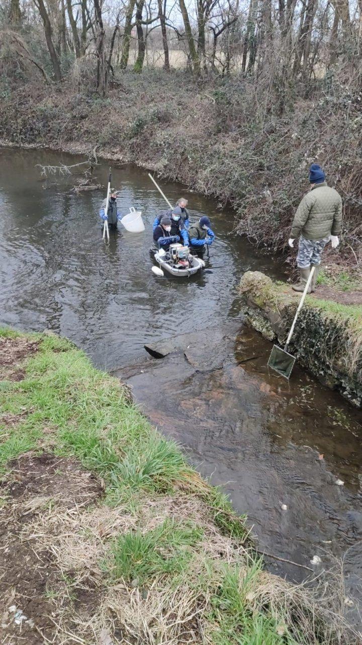 asciutta Navigli interventi fauna ittica