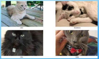 Giornata Nazionale del gatto: tutto sui nostri amici pelosi