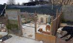 Le foto della casa degli orrori a un passo da Milano: animali costretti a vivere nelle proprie feci