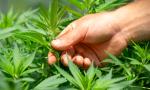 Tra gli italiani e la cannabis legale di Justmary è vero amore; saprà il nuovo governo Draghi intuirne i benefici?