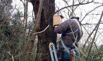 Volontari all'opera all'Oasi Smeraldino per creare i nidi artificiali