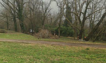 Taglia alberi al parco per rubare la legna: 60enne denunciato