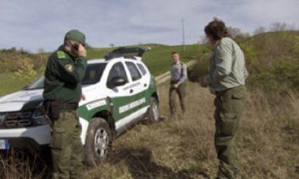 Uccelli trovati morti nelle campagne: sospetto avvelenamento