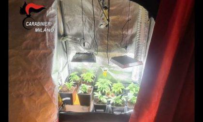 Coltivava piante di marijuana in casa: arrestato 18enne