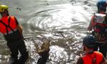 Asciutta del Naviglio, salvati oltre 12 quintali di pesci a rischio sopravvivenza
