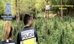 Dalla Spagna all'hinterland milanese: maxi traffico di droga, una base a Rozzano